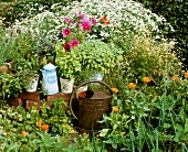 Herb garden with old watering can