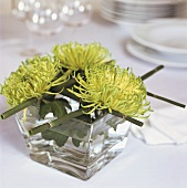 Green chrysanthemums in glass of water as table decoration