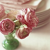 Pink ranunculuses in small vase in front of pile of plates