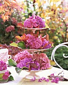 Hydrangeas and autumn leaves on tiered stand on table