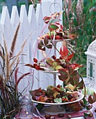 Rose hips, chestnuts, hydrangeas, autumn leaves on tiered stand