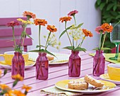 Zinnias and fennel in purple bottles on tea table