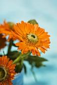 Marigolds in mother-of-pearl beaker (detail)