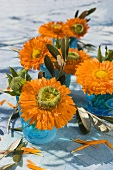 Marigolds and olive sprigs in blue glasses