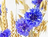 Kornblumen und Getreideähren
