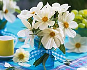 White cosmos with sage as table decoration