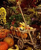 Cart with pumpkins, kale and savoy cabbage