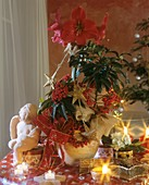 Christmas arrangement of Amaryllis and coral ardisia