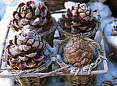 Pine cones with hoar frost