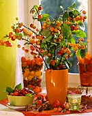 Ornamental apple branches (Malus) in orange vase, green bowl