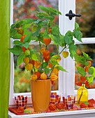 Chinese lanterns (Physalis) in orange vase