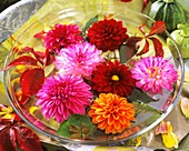 Dahlias floating in a glass vase