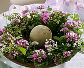 Wreath of various types of scented geraniums