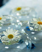 Marguerites used as table decoration
