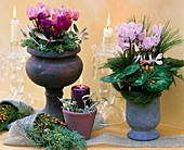 Decoration with cyclamen