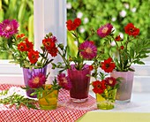 Centaurea and Geums in glasses by window