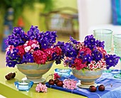 Delphiniums and Sweet Williams in two terracotta vases