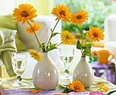 Heliopsis in bulbous vases