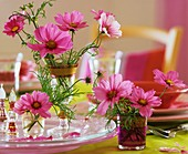 Cosmos in glasses as table decoration