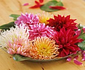 Types of dahlias: cactus, semi-cactus and decorative