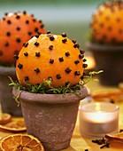 Orange-studded with cloves