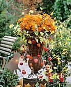 Arrangement of Dendranthema (Chrysanthemums) in wicker vase