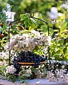 Clematis seed heads, grapes- Vitis, snow berries-Symphoricarpos