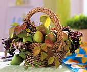 Basket of pears, elderberries and blackberry leaves