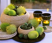 Fruits of tropical Cucurbitaceae