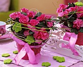 Pink-flowered Azalea