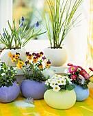 Terracotta eggs with grape hyacinths, primroses, daisies
