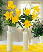 Daffodils in white vases