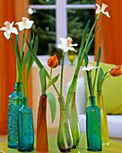 Narcissi and tulips in coloured bottles