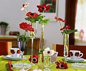 Anemoneblüten mit Aralienblättern in Gläsern