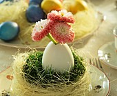 Easter nest with duck egg and daisies