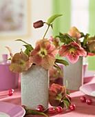 Lenten roses (Helleborus orientalis)