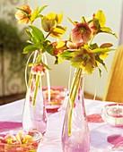 Lenten roses (Helleborus orientalis) as table decoration