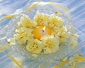 Pale-yellow primulas around yellow candle on glass plate