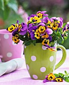 Horned violets (yellow with purple edge) in green mug