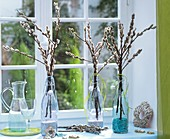 Pussy willow in glass bottles on window-sill