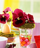 Pansies with moss ring & glass balls as Easter decoration