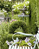 Romantic garden with clipped box and petunias