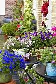 Various plants in pots in inner courtyard of a town house