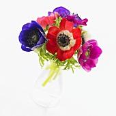Anemone 'Coronaria De Caen' in glass vase