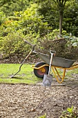 Wheelbarrow full of branches in garden