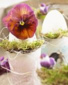 F1 hybrid viola in Easter egg
