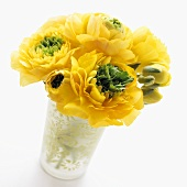 Ranunculus 'Mirabelle Vert' in vase
