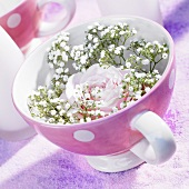 Pink rose with baby's breath in spotted cup