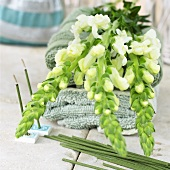 White snapdragons on towels, incense sticks