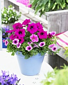 Pink petunias in flowerpot on garden table